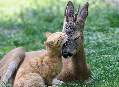 more-animal-friends-6