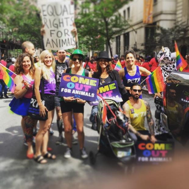 Peta_Animal Rights_Gay Pride